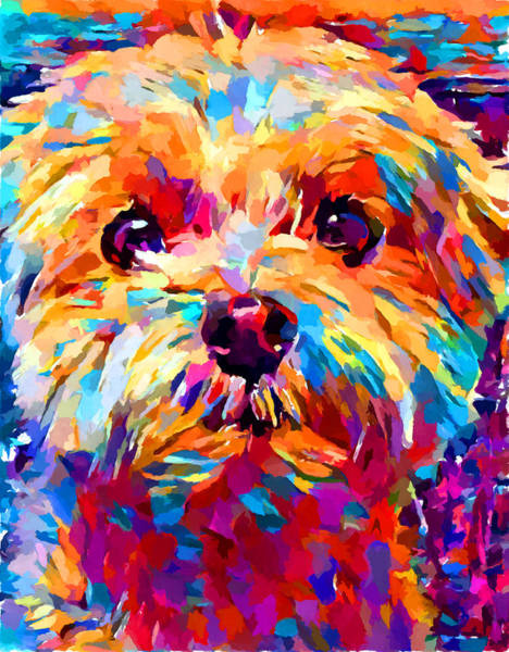 Wall Art - Painting - Maltese 3 by Chris Butler