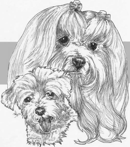 Drawing - Maltese And Pup by Barbara Keith