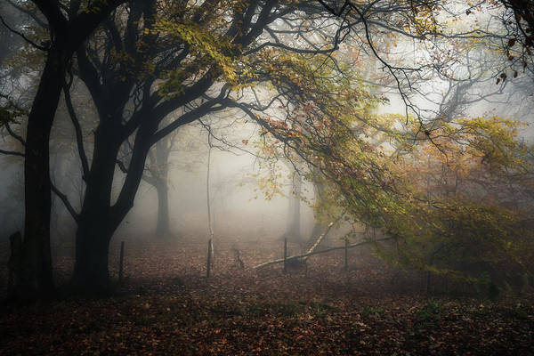 Photograph - Mam Tor Woodland No 6 by Chris Fletcher