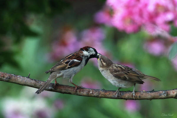 Photograph - Mama And Baby Sparrow by Trina Ansel
