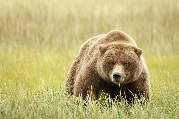 Wall Art - Photograph - Mama Bear by Ann Skelton