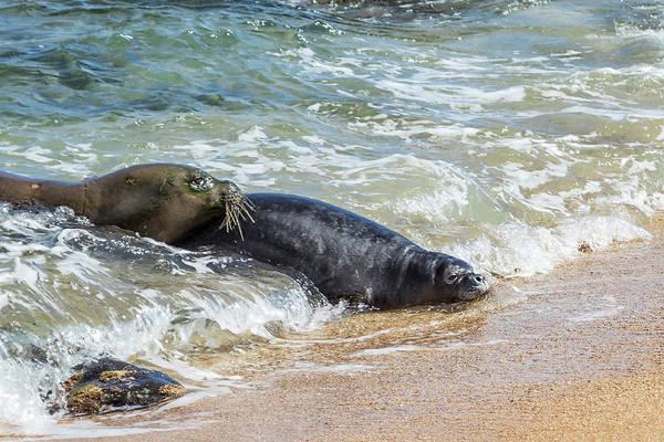 Photograph - Mama Monk Seal And Pup At The Shoreline, No. 4 - Rb00 And Pk1 by Belinda Greb