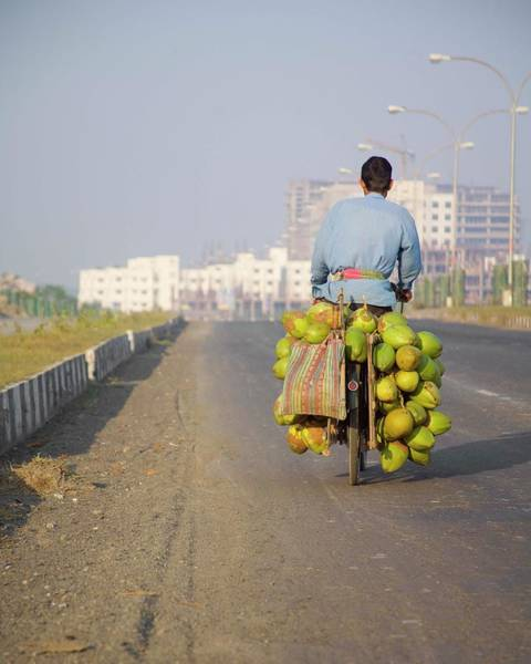 Door To Door Photograph - Man On Bicycle With Coconuts by Ashok Sinha