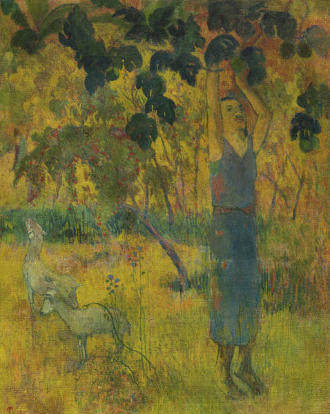Wall Art - Painting - Man Picking Fruits From The Tree, 1897 by Paul Gauguin