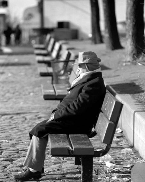 Queen Photograph - Man Sitting On A Park Bench Soaking Up by New York Daily News Archive