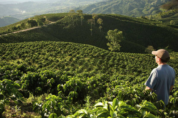 Look Away Photograph - Man Standing In Coffee Field Looking At by Ligia Botero