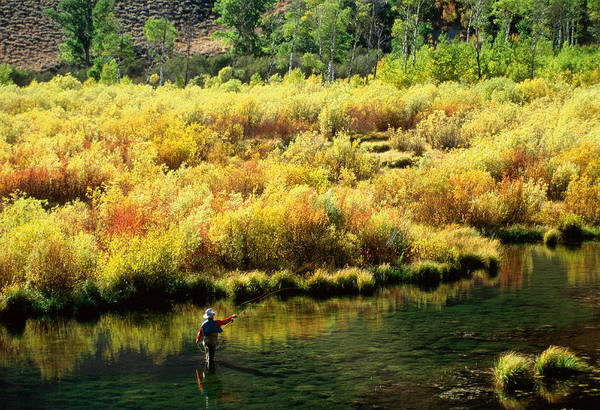 Sport Fishing Photograph - Man Standing In River, Fly Fishing, In by Steve Bly