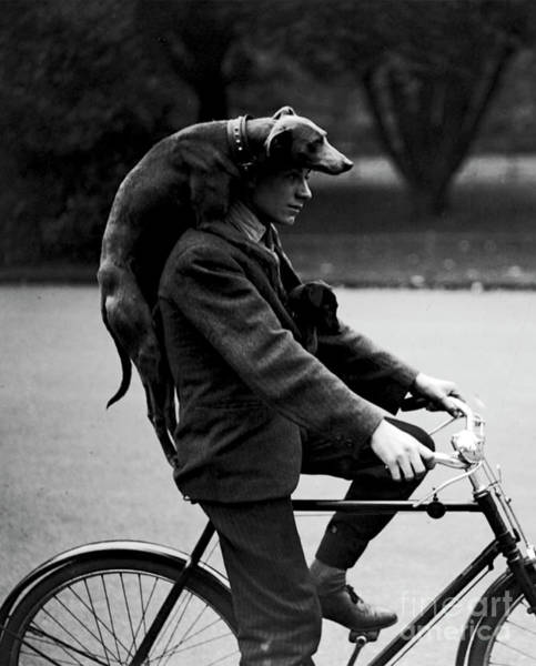 Photograph - Man With Dog On Cycle - 1931 by Doc Braham