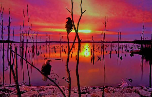 Wall Art - Photograph - Manasquan Eagles  by Geraldine Scull