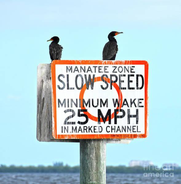 Photograph - Manatee Zone by Christine Dekkers