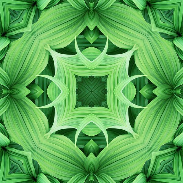 Symmetry Photograph - Mandala 5 by Steve Satushek