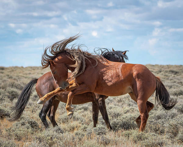 Photograph - Mane For Days by Mary Hone