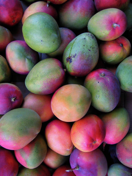 Mangos Photograph - Mango Mania by Digi guru
