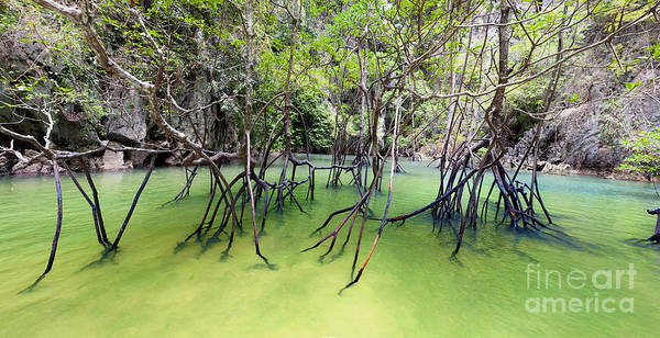 Wall Art - Photograph - Mangrove Forest by Banana Republic Images