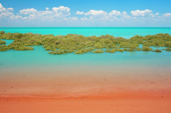 Broome Photograph - Mangroves Roebuck Bay by Frances Andrijich