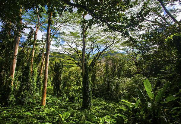 Photograph - Manoa Falls Rain Forest by Anthony Jones