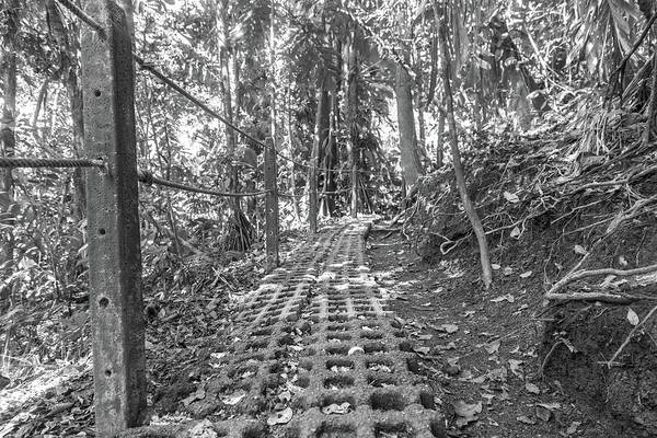 Wall Art - Photograph - Manuel Antonio Jungle Pathway by Betsy Knapp