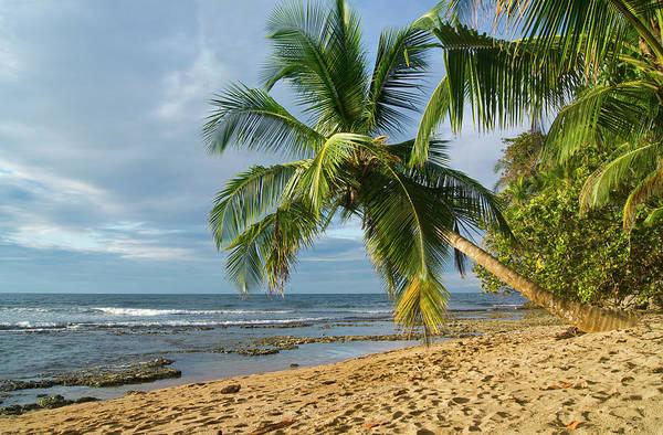 Manzanillo Photograph - Manzanillo, Puerto Viejo, Costa Rica by Kryssia Campos