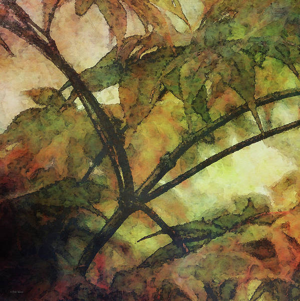 Photograph - Maple Expression 5585_idp_me_2 by Steven Ward