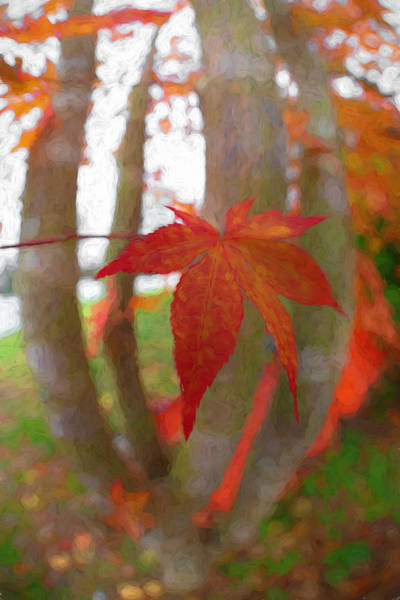 Photograph - Maple Leaf In Autumn Oil Painting by Debra and Dave Vanderlaan