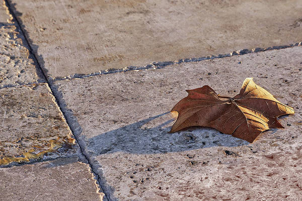 Wall Art - Photograph - Maple Leaf On Travertine by Richard Rizzo