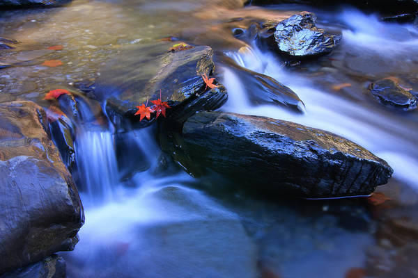 Wall Art - Photograph - Maple Leaves In Stream by Samyaoo