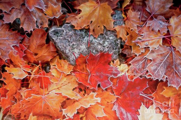 Office Decor Mixed Media - Maple Leaves by Veikko Suikkanen