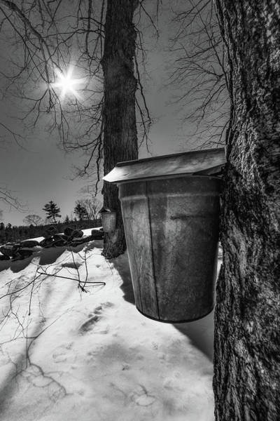 Photograph - Maple Sap Bucket by Joann Vitali