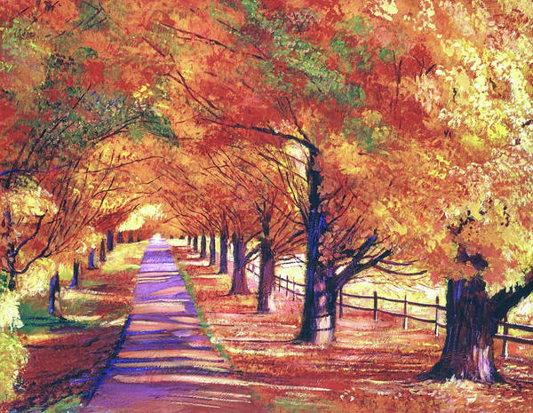 Painting - Maple Tree Lane by David Lloyd Glover