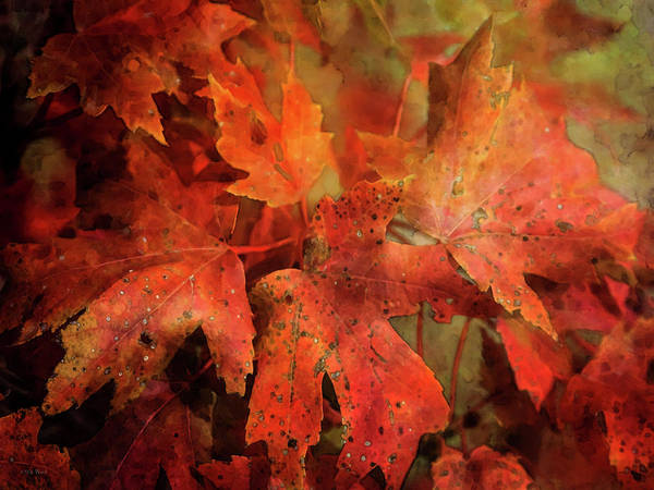 Photograph - Maples Last Show 6138 Idp_2 by Steven Ward