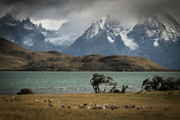 Patagonia Photograph - Cauquen by Ryan Weddle