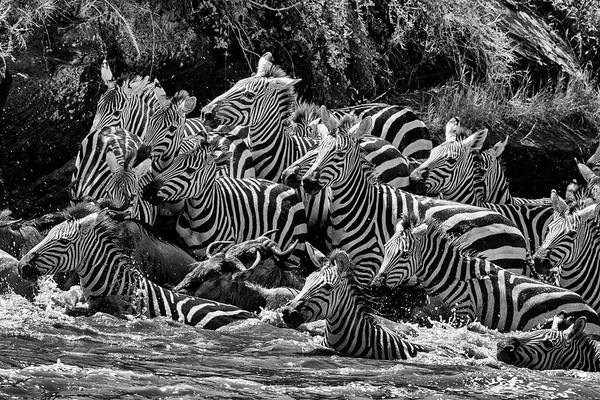 Photograph - Mara Crossing 1 by Mark Hunter