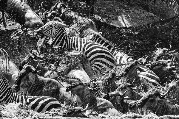 Photograph - Mara Exit In Monochrome by Mark Hunter