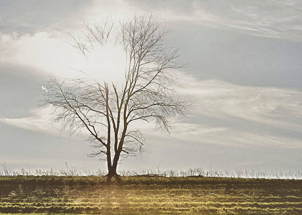 Photograph - March Horizon  by JAMART Photography