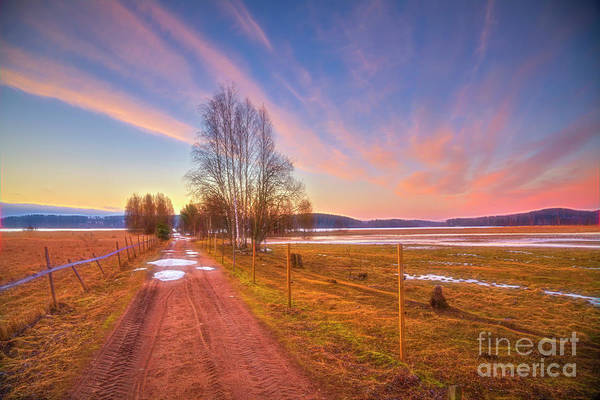 Birch Photograph - March Morning by Veikko Suikkanen