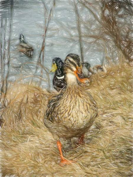 Photograph - Marching Waterfowl Colored Pencil by Don Northup