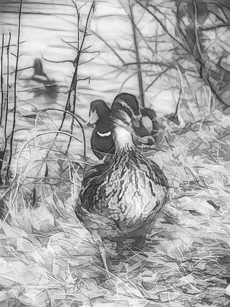 Photograph - Marching Waterfowl Sketch by Don Northup