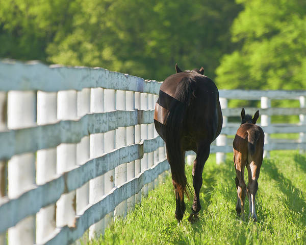 Mare Photograph - Mare And Foal by Susan M. Carter