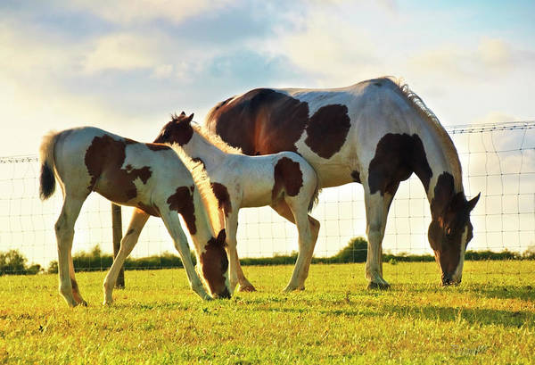 Mare Photograph - Mare And Foals Grazing by Rosanemiller Photography
