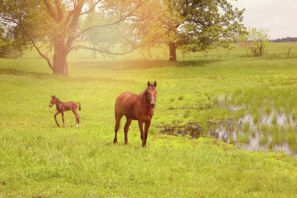Mare And Foal Photograph - Mare And Her Foal by Karen Varnas