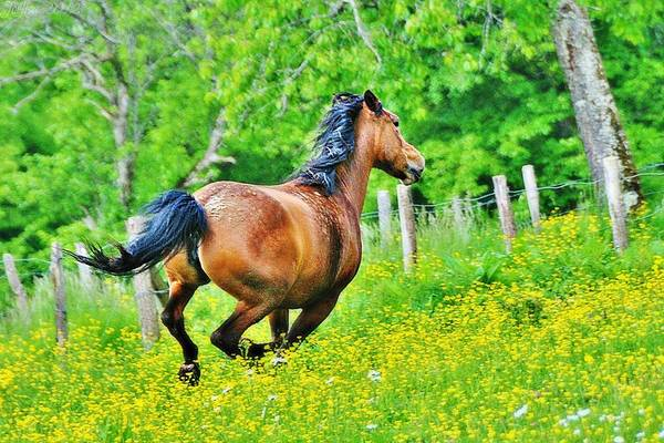 Mare Photograph - Mare Galloping by Nature Et Animaux Sont Mes Sujets D'inspiration...