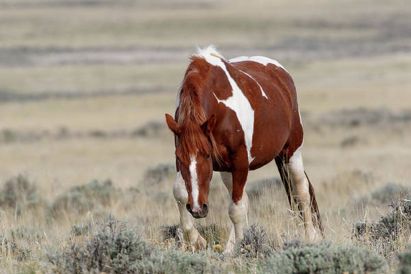 Photograph - Mare Wapiti by Ronnie and Frances Howard