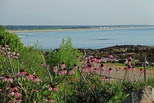 Photograph - Marginal Way Flowers Facing Ogunquit Beach Ogunquit Maine by Toby McGuire