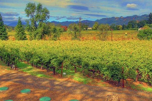 Camera Raw Photograph - Mario's Vineyard  Cabernet Sauvignon by Brenton Cooper