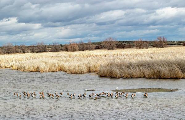 Photograph - Market Lake Landscape by Michael Chatt
