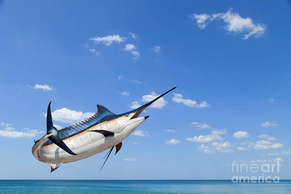 Wall Art - Photograph - Marlin - Swordfish,sailfish Saltwater by Pk.phuket Studio