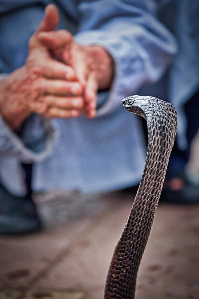 Photograph - Marrakech Snake Charming - Morocco by Stuart Litoff