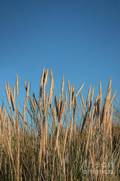 Wall Art - Photograph - Marram by John Edwards