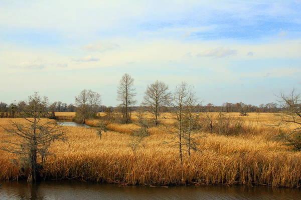Photograph - Marsh Creek by Cynthia Guinn