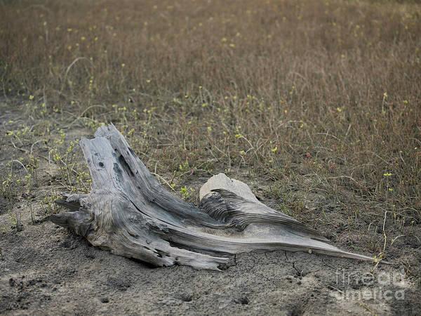 Photograph - Marsh Driftwood 2 by Patrick M Lynch